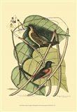 Baltimore Bird and Catalpah Art Print