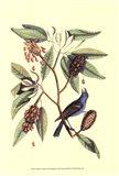 The Blew Grosbeak Art Print