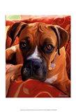 Harry Boxer Art Print