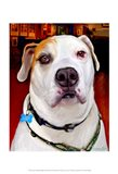 Sonny American Bulldog Art Print