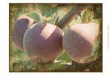 Vintage Apples I Art Print