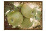Vintage Apples III Art Print