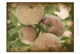 Vintage Apples IV Art Print