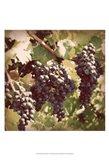 Vintage Grape Vines I Art Print