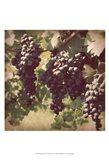 Vintage Grape Vines III Art Print