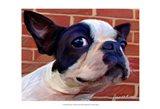 Boston Puppy Art Print