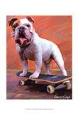 Bull Dog Nose Grind Art Print