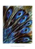 Feather I Art Print