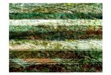 Lines of Nature II Art Print