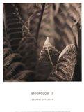 Moonglow II Art Print