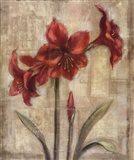 Scarlett Blossom II Art Print