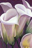 Purple Lillies Art Print