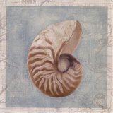 Framed Shells I Art Print