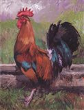 Red And Turquoise Rooster Art Print
