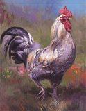 Purple Rooster Art Print