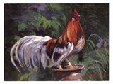 Red And White Rooster Art Print