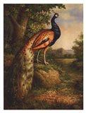 Classic Peacock Art Print