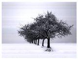 Winter Tree Line I Art Print