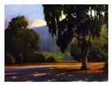 Eucalyptus Sunset Art Print