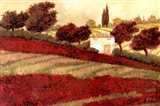 Apapaveri Toscana I Art Print
