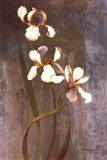 Iris Rhythms Art Print