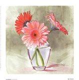Coral Gerbera Art Print