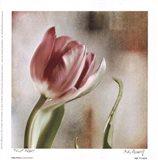 Tulip Front Art Print