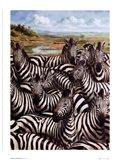 Zebra Gathering Art Print