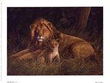 Lion And Cub Art Print