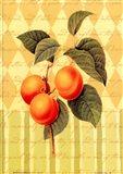 Botanical Apricot Art Print