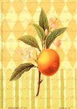 Botanical Orange Art Print