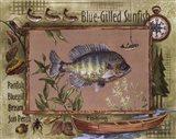 Blue-Gilled Sunfish Art Print