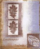 Leaf II Art Print