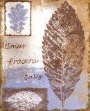 Leaf III Art Print