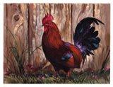 Bantie Rooster Art Print