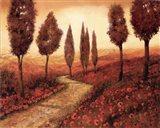 Strada Tra I Papaveri Art Print