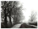 Misty Tree-Lined Road Art Print