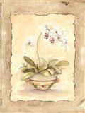 Orchid Sanderiana Art Print