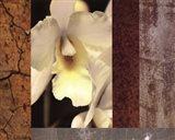 Tropical Whites I Art Print