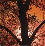 Sunset Forest I Art Print