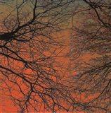 Sunset Forest III Art Print