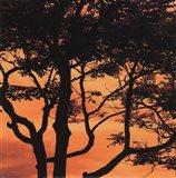 Sunset Forest IV Art Print
