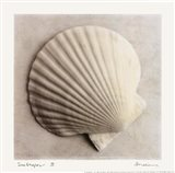 Sea Shapes II - Mini Art Print