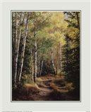 Woodland Path Art Print