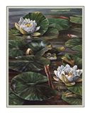 Frog In Lily Pond Art Print