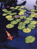 Koi Pond I Art Print