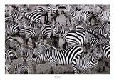 Zebras Abstraction Art Print