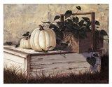 White Pumpkins Art Print