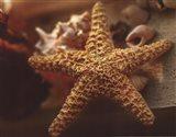 Starfish I Art Print