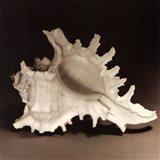 Spiny Shell I Art Print